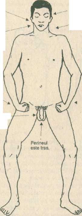 penis în interiorul circuitului